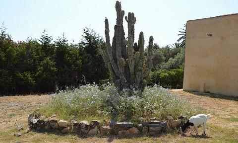 Giardino del cactus